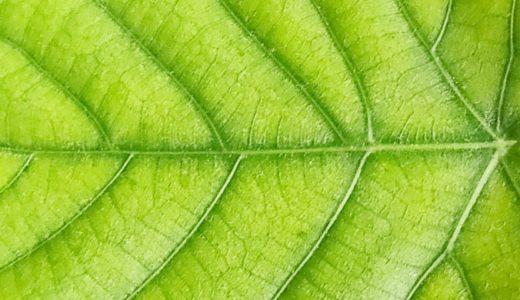 幹細胞培養液を使った化粧品は植物由来とヒト由来の2種類があります。